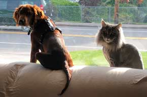 Setter and Cat on Couch